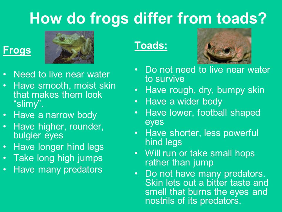 How do frogs differ from toads