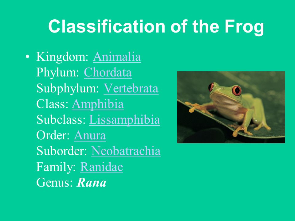 Classification of the Frog