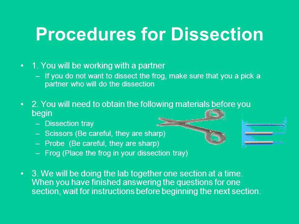 Procedures for Dissection