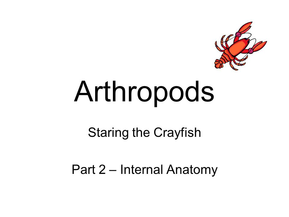 Staring the Crayfish Part 2 – Internal Anatomy - ppt video online ...