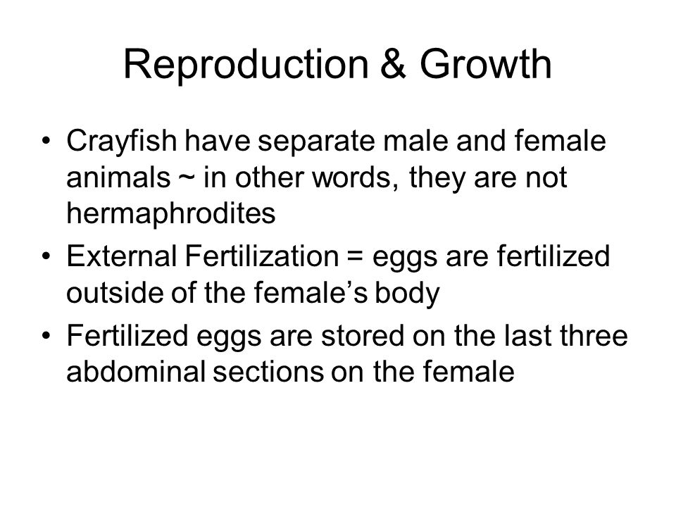 Reproduction & Growth Crayfish have separate male and female animals ~ in other words, they are not hermaphrodites.
