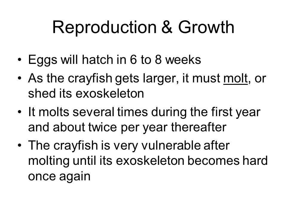 Reproduction & Growth Eggs will hatch in 6 to 8 weeks