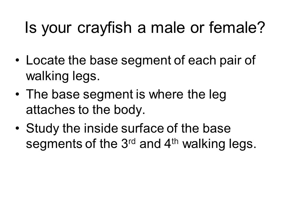 Is your crayfish a male or female