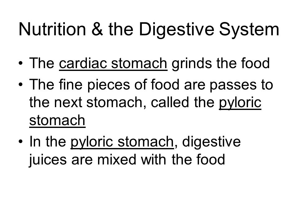 Nutrition & the Digestive System