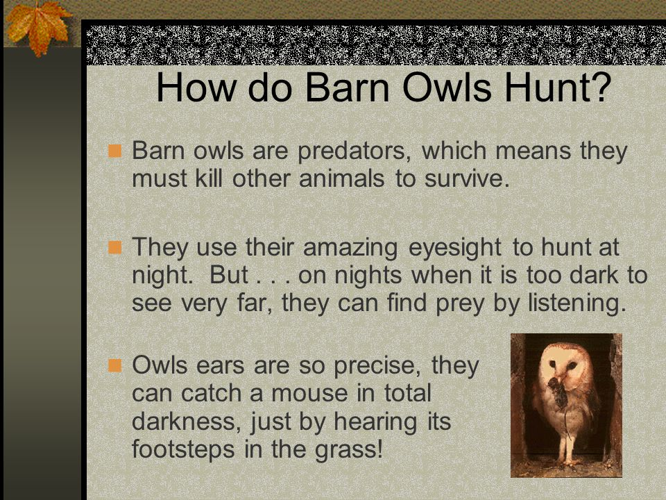 How do Barn Owls Hunt Barn owls are predators, which means they must kill other animals to survive.