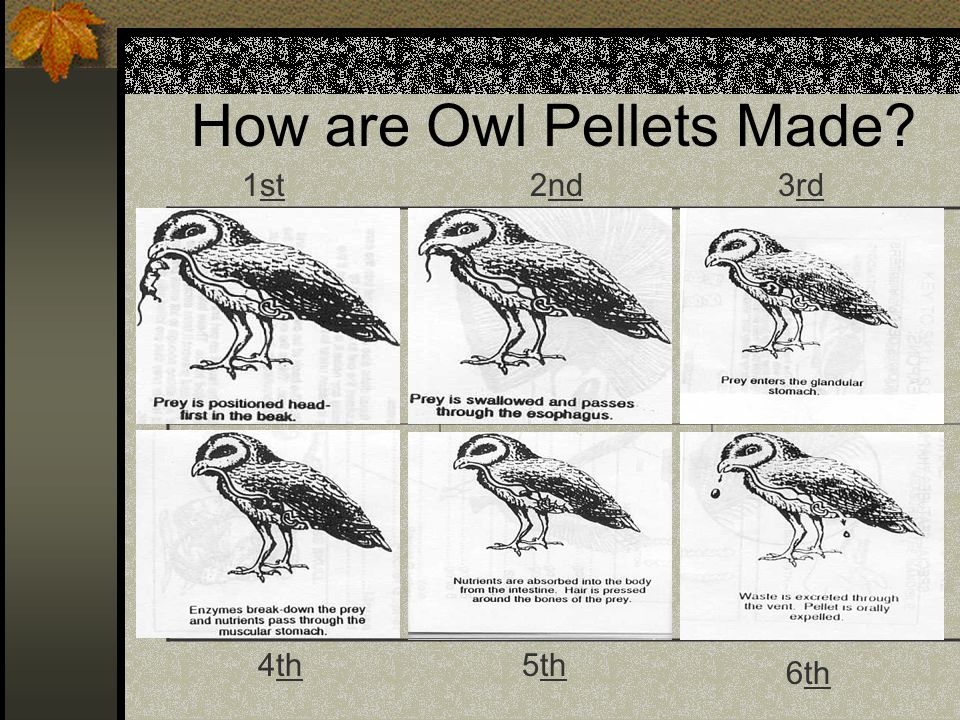 How are Owl Pellets Made