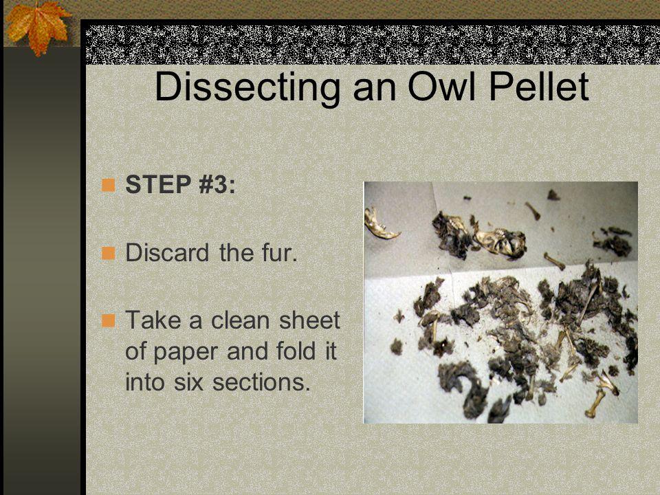 Dissecting an Owl Pellet