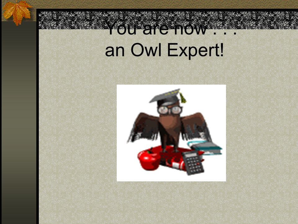 You are now . . . an Owl Expert!