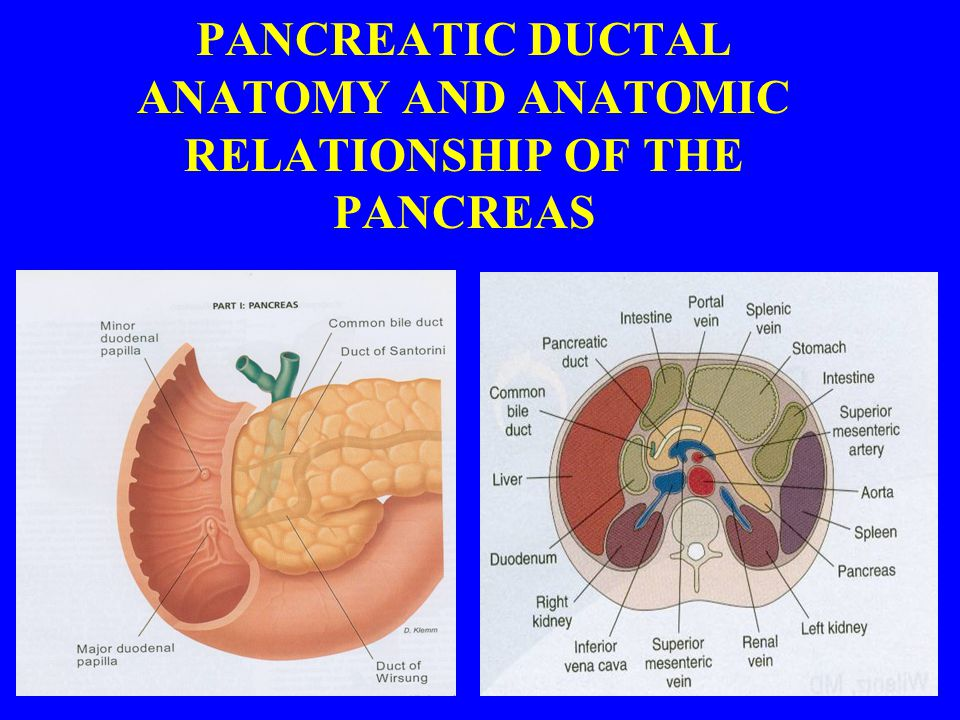 PANCREATIC DUCTAL ANATOMY AND ANATOMIC RELATIONSHIP OF THE PANCREAS