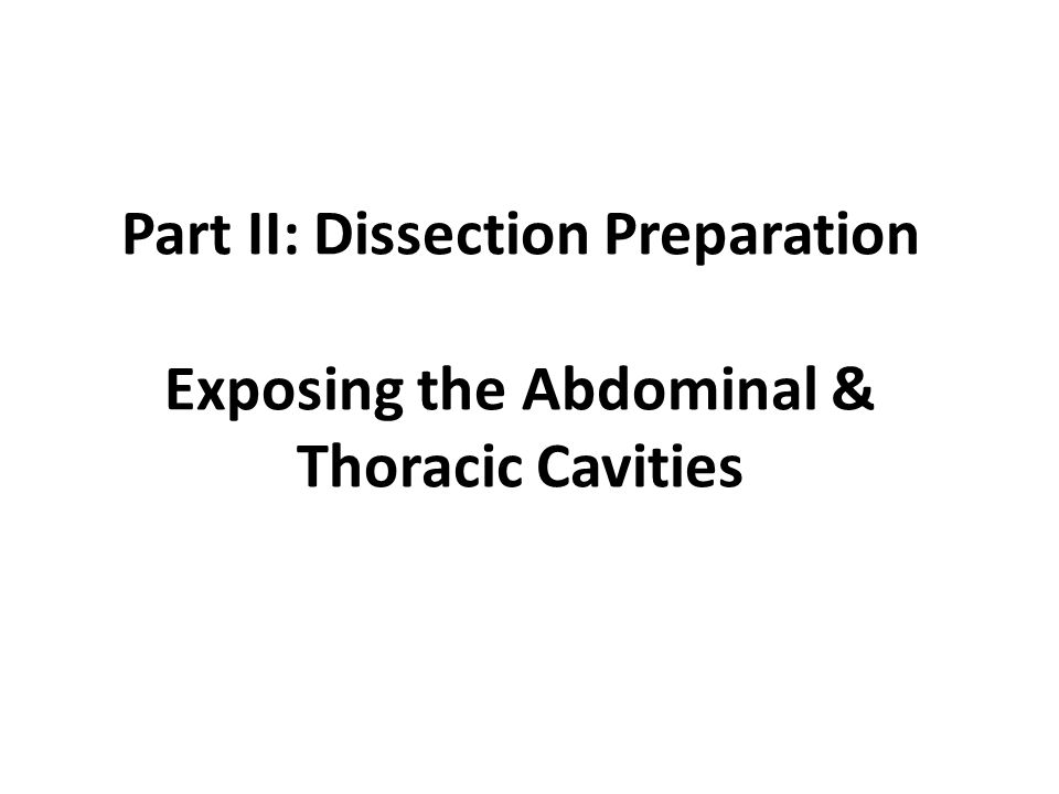 Part II: Dissection Preparation Exposing the Abdominal & Thoracic Cavities
