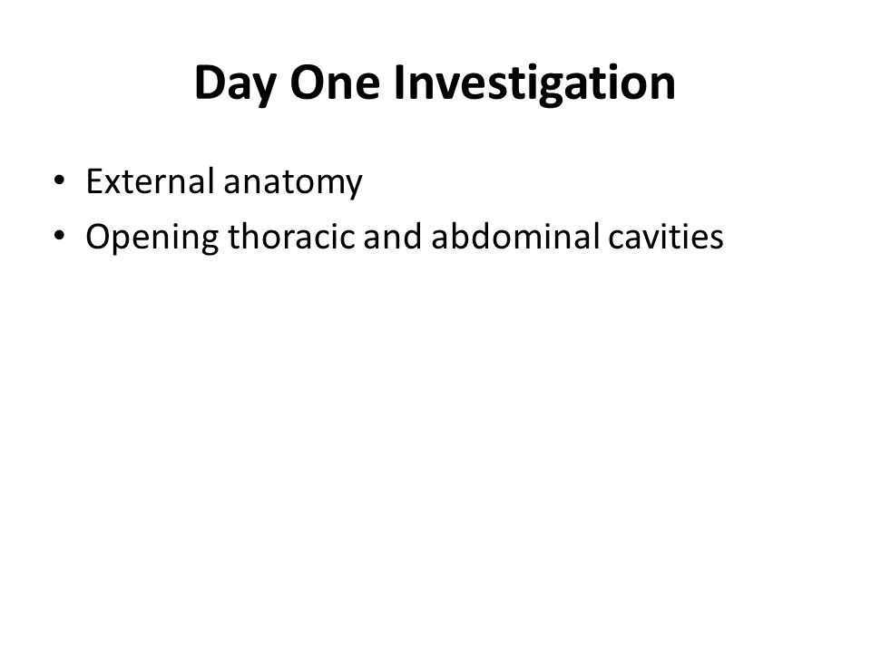 Day One Investigation External anatomy
