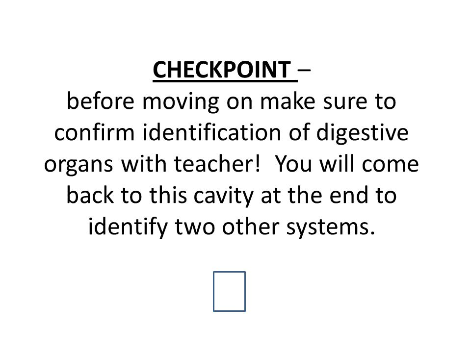 CHECKPOINT – before moving on make sure to confirm identification of digestive organs with teacher.