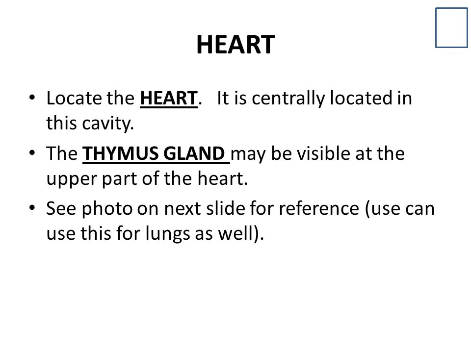 HEART Locate the HEART. It is centrally located in this cavity.
