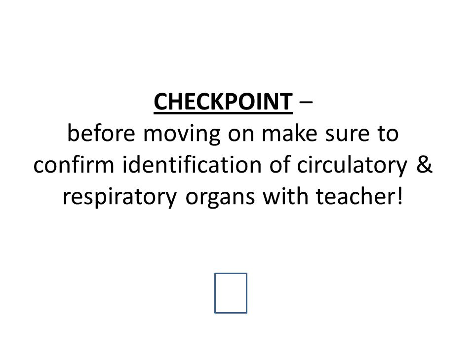 CHECKPOINT – before moving on make sure to confirm identification of circulatory & respiratory organs with teacher!