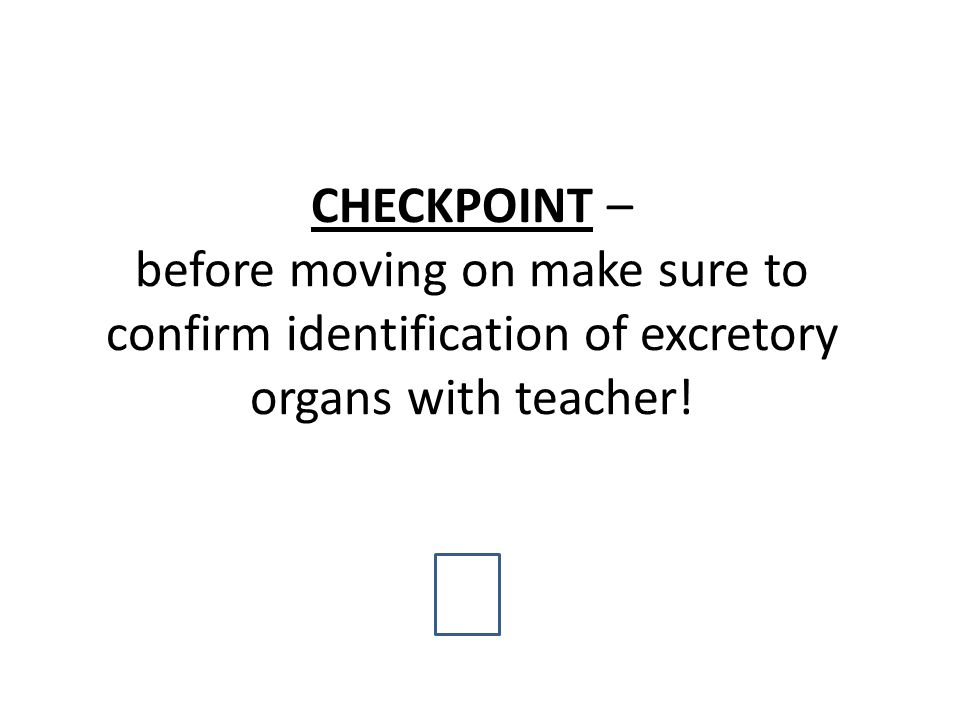 CHECKPOINT – before moving on make sure to confirm identification of excretory organs with teacher!