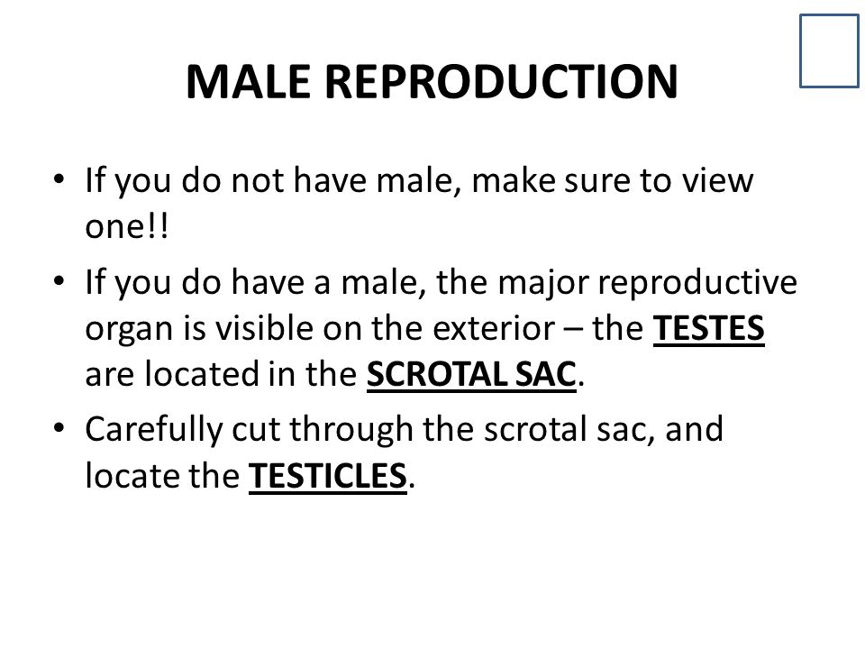 MALE REPRODUCTION If you do not have male, make sure to view one!!