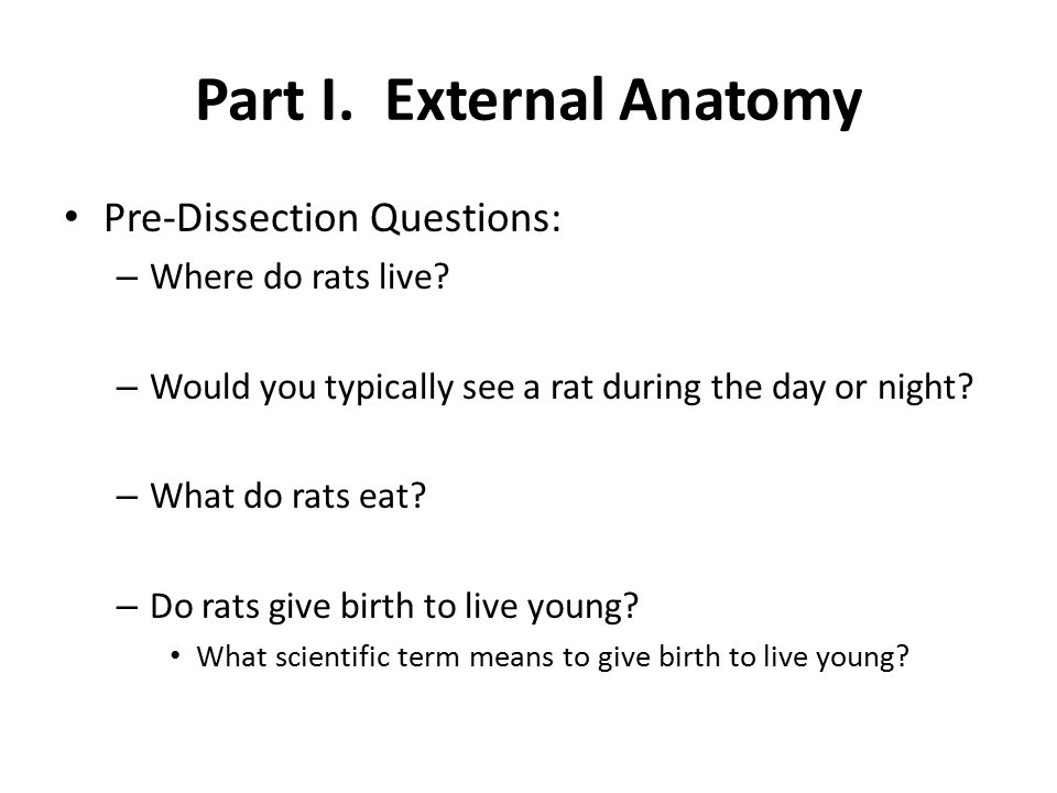 Part I. External Anatomy