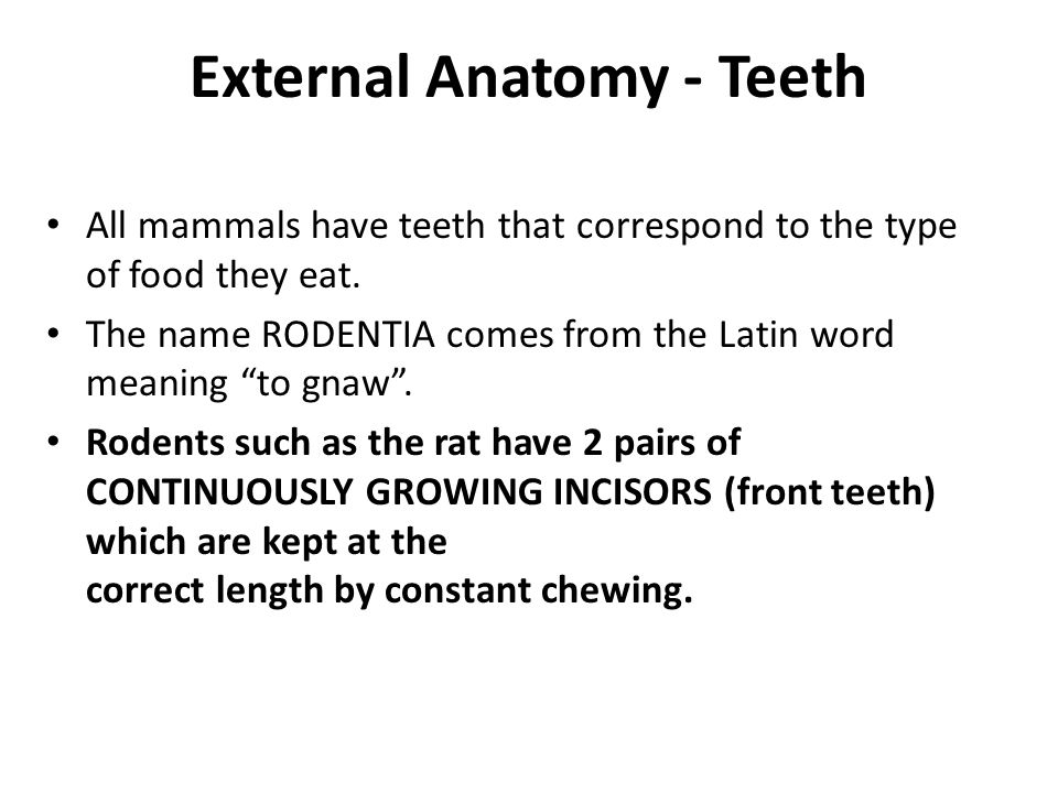 External Anatomy - Teeth