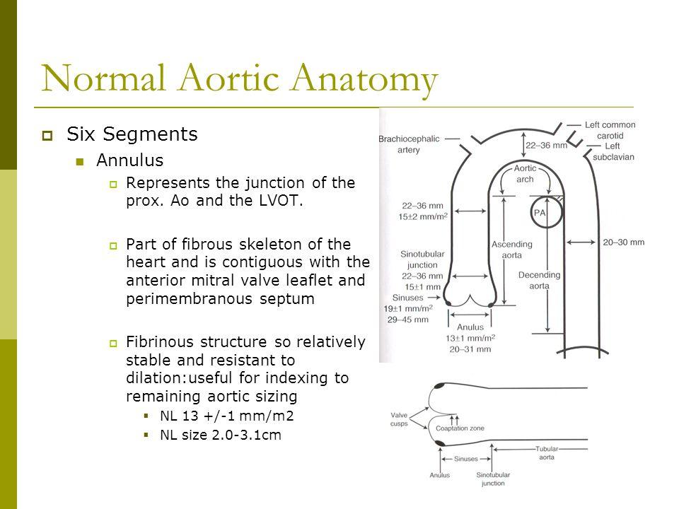 Normal Aortic Anatomy Six Segments Annulus