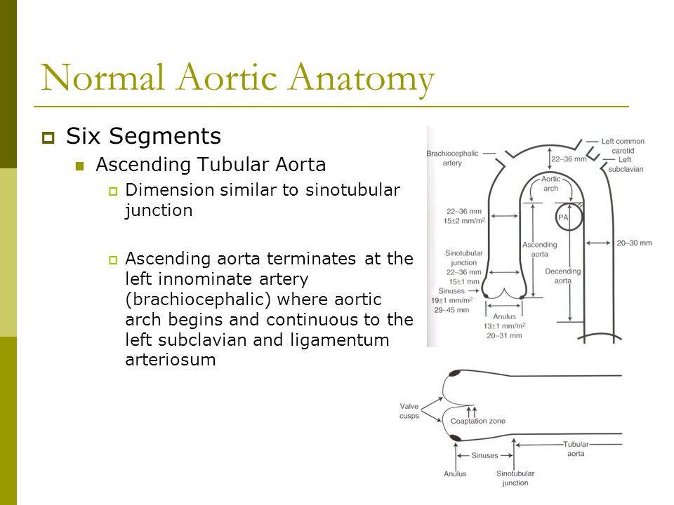 Normal Aortic Anatomy Six Segments Ascending Tubular Aorta