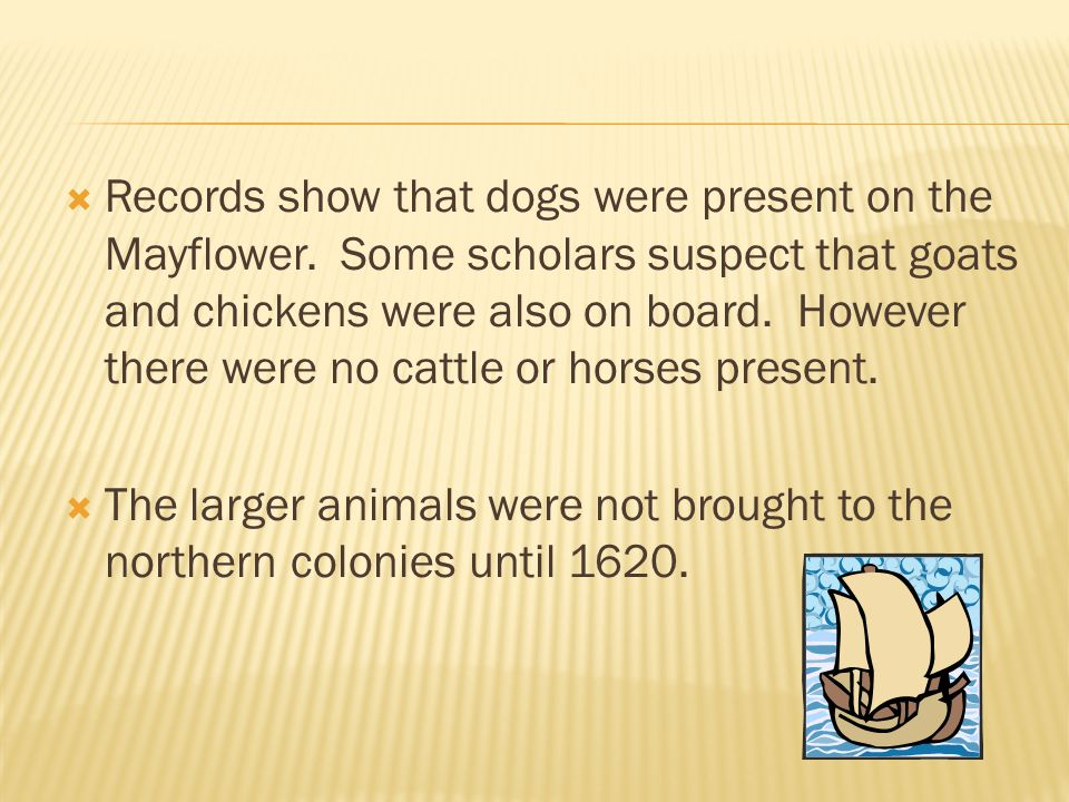 Records show that dogs were present on the Mayflower