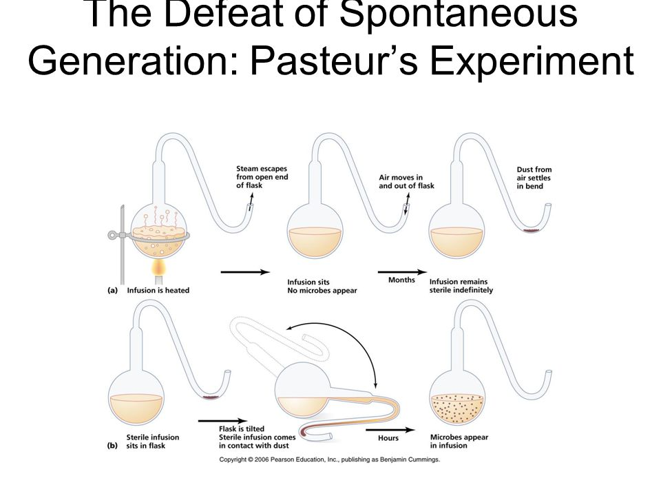 The Defeat of Spontaneous Generation: Pasteur's Experiment