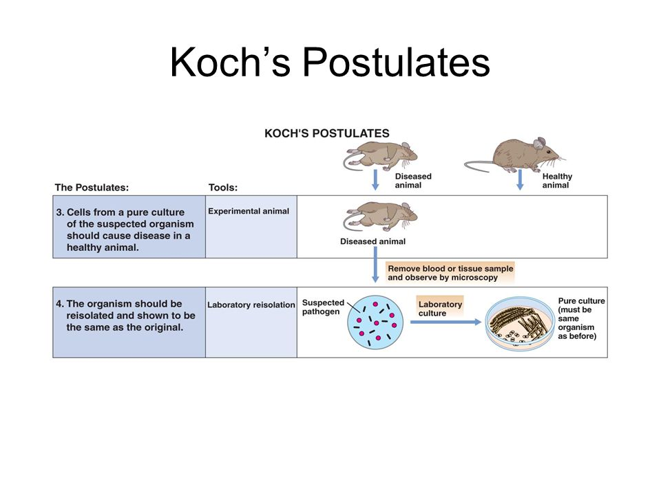 Koch's Postulates Koch's Postulates
