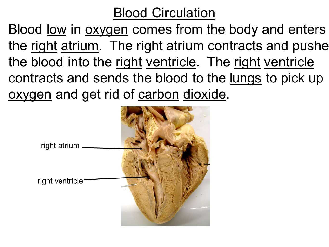 Blood low in oxygen comes from the body and enters