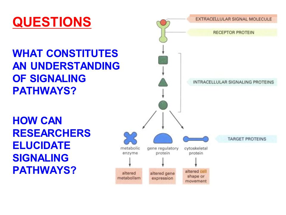 QUESTIONS WHAT CONSTITUTES AN UNDERSTANDING OF SIGNALING PATHWAYS