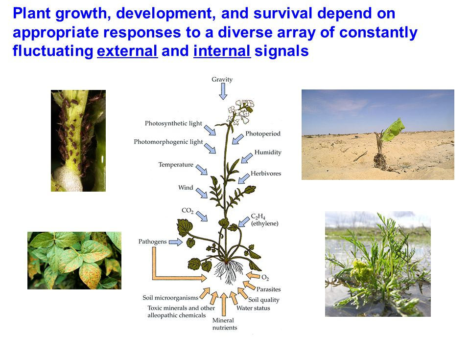 Plant growth, development, and survival depend on appropriate responses to a diverse array of constantly fluctuating external and internal signals