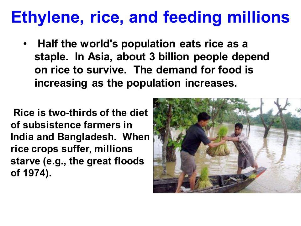 Ethylene, rice, and feeding millions