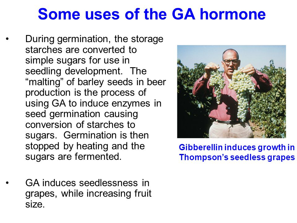 Some uses of the GA hormone