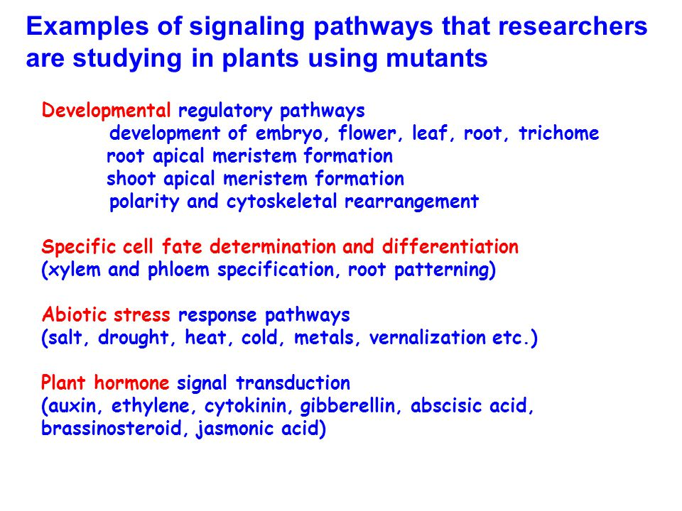 Examples of signaling pathways that researchers are studying in plants using mutants