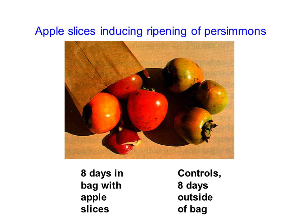 Apple slices inducing ripening of persimmons