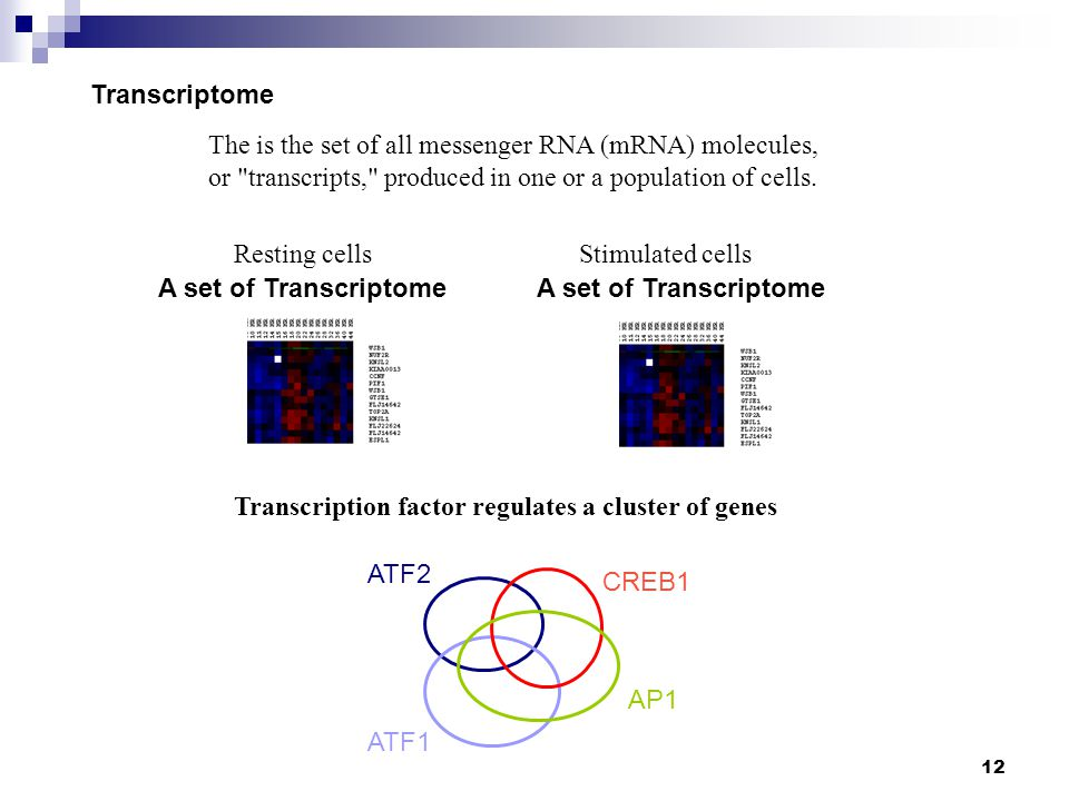Transcriptome The is the set of all messenger RNA (mRNA) molecules, or transcripts, produced in one or a population of cells.