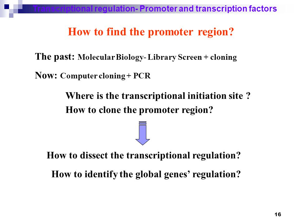 How to find the promoter region