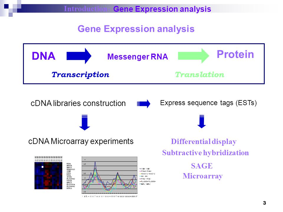 Protein DNA Gene Expression analysis Introduction-
