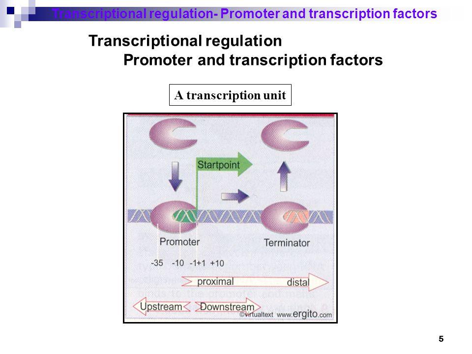Transcriptional regulation Promoter and transcription factors
