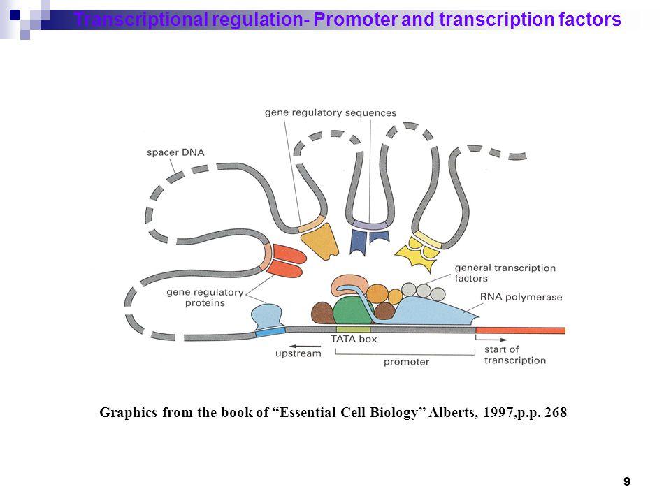 Transcriptional regulation- Promoter and transcription factors