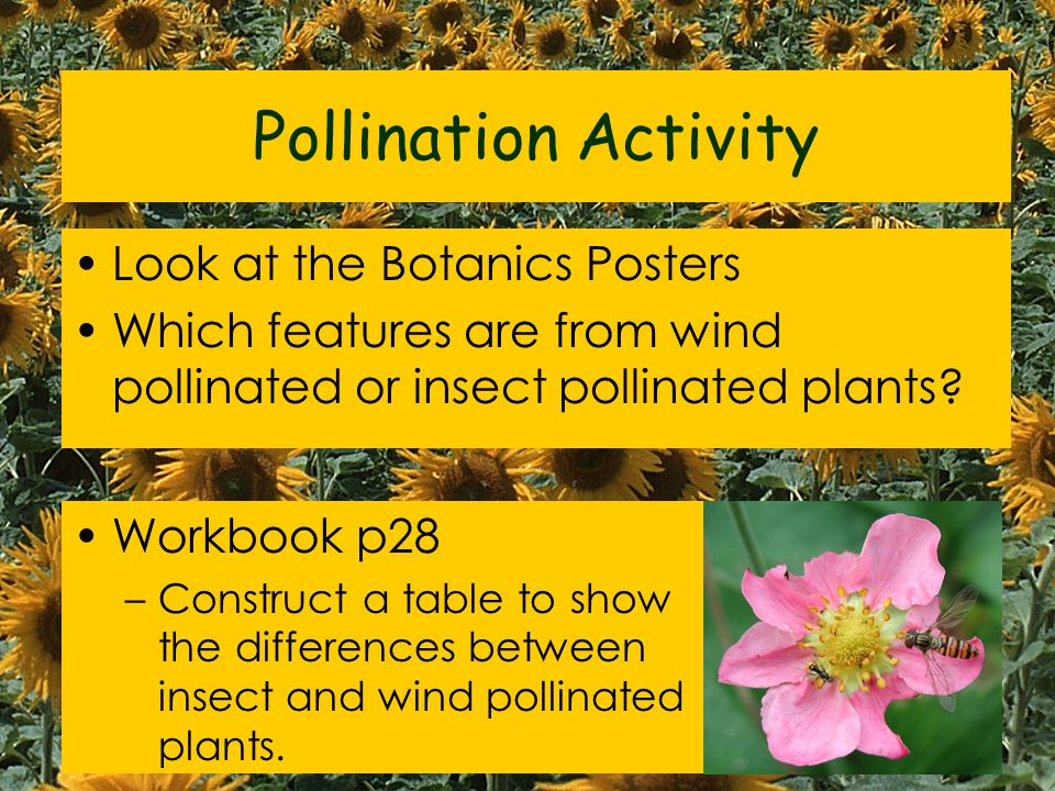Pollination Activity Look at the Botanics Posters