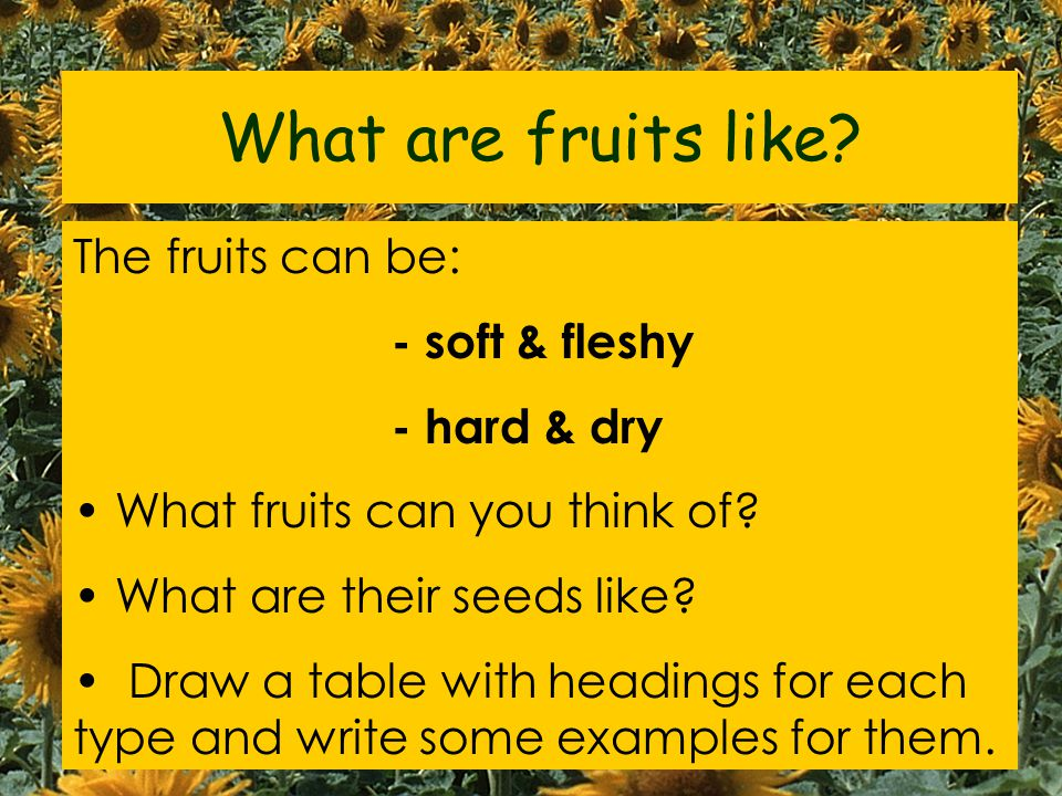 What are fruits like The fruits can be: - soft & fleshy - hard & dry