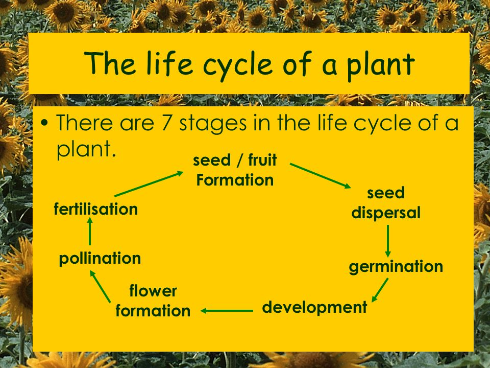 The life cycle of a plant