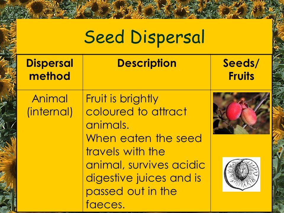 Seed Dispersal Dispersal method Description Seeds/ Fruits