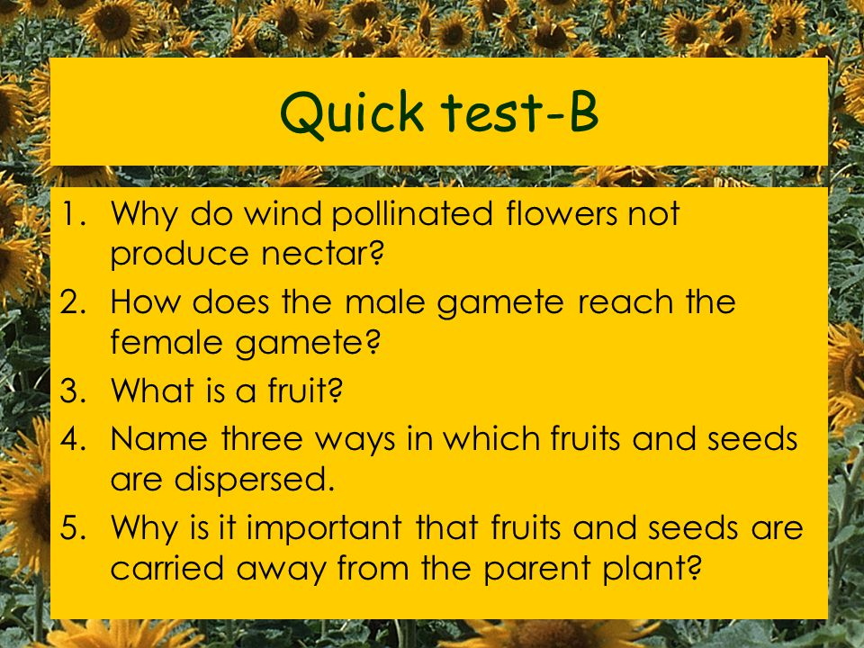 Quick test-B Why do wind pollinated flowers not produce nectar