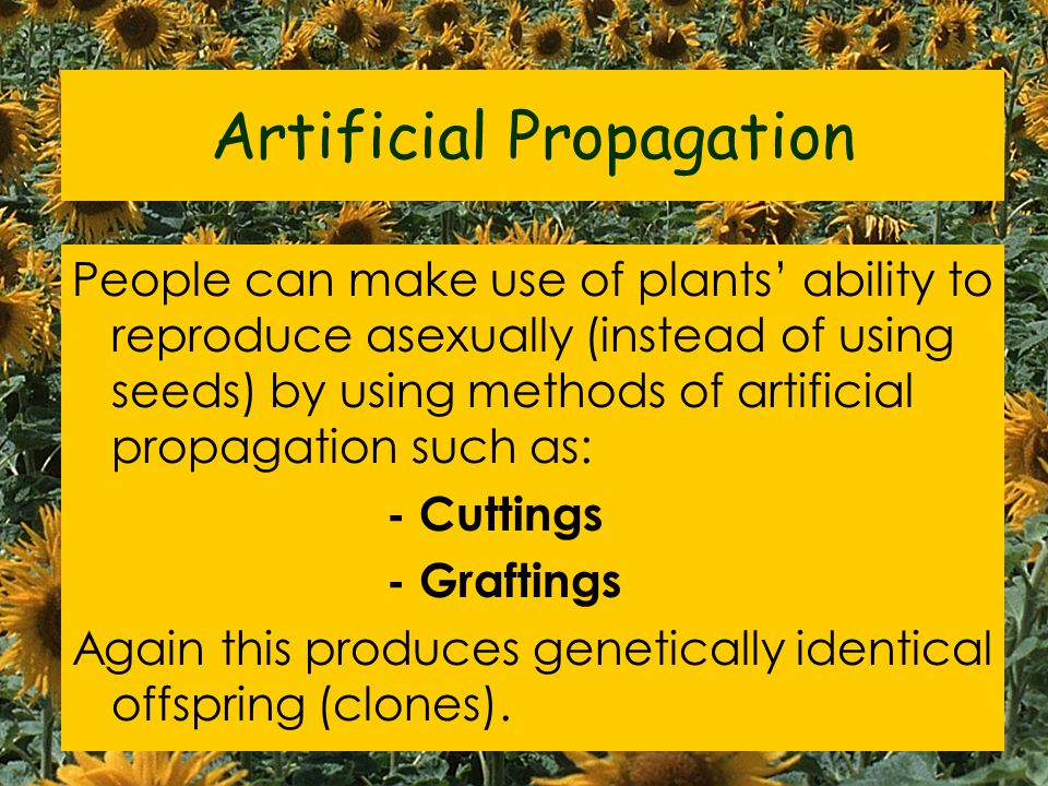 Artificial Propagation