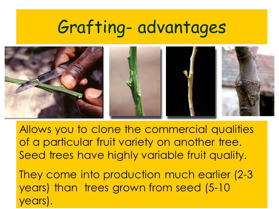 Grafting- advantages