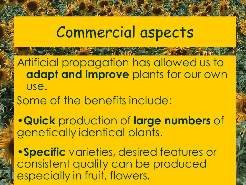 Commercial aspects Artificial propagation has allowed us to adapt and improve plants for our own use.