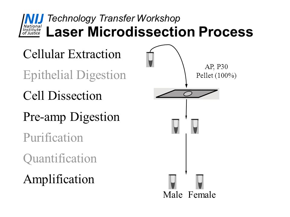 Laser Microdissection Process