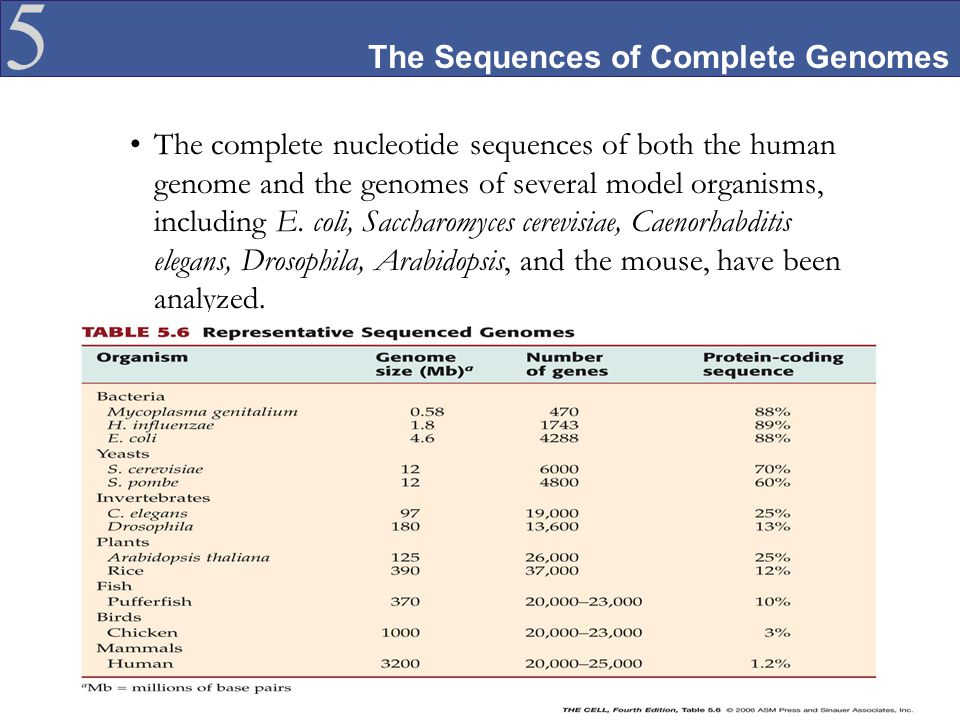The Sequences of Complete Genomes