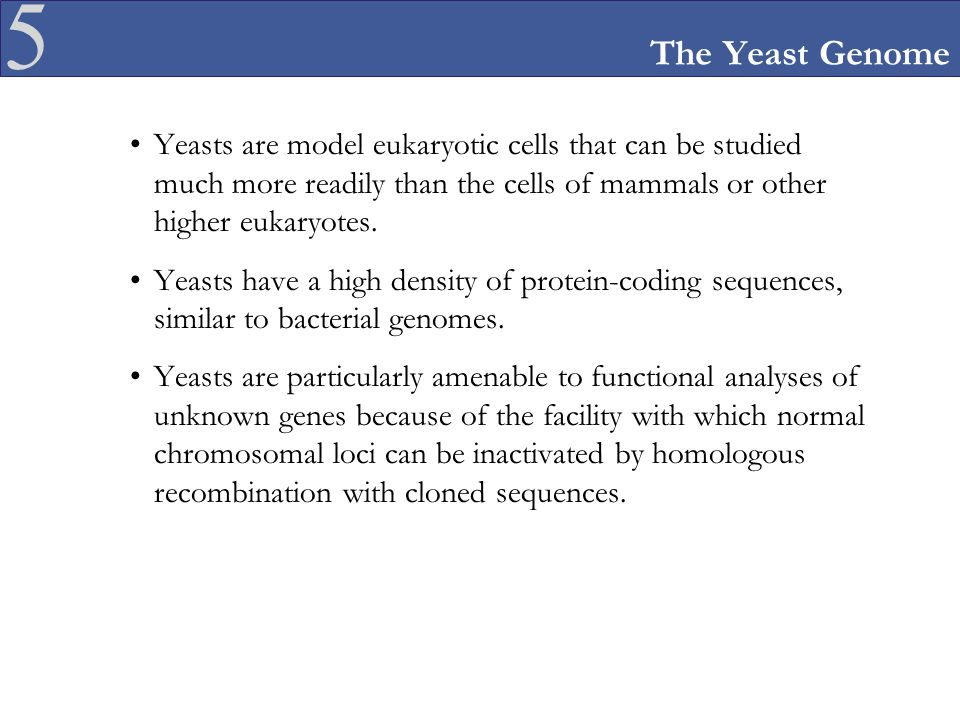 The Yeast Genome Yeasts are model eukaryotic cells that can be studied much more readily than the cells of mammals or other higher eukaryotes.